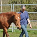 Natural Horsemanship, EAQ Bodster