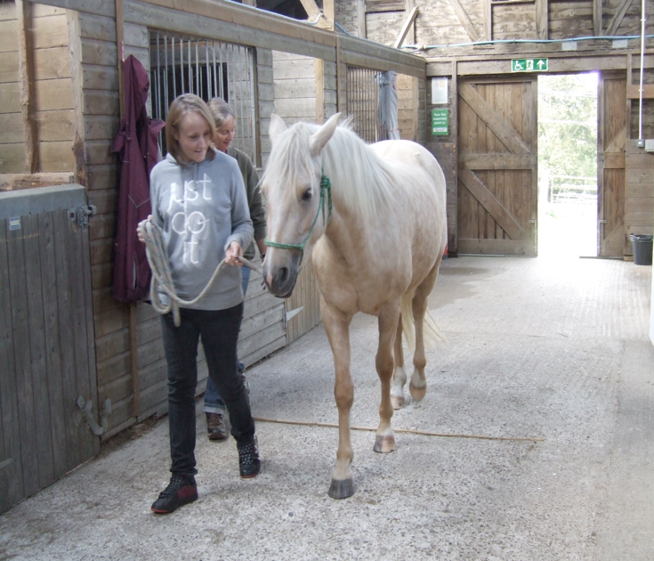 The Power of Equine Therapy