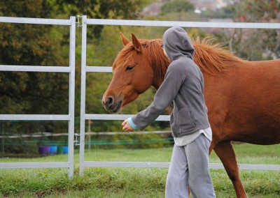 Bodster - Raising aspirations and ambition through interaction with horses
