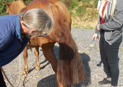 Grooming pony, Bodster pony