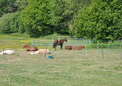 Bodster herd relaxing at home