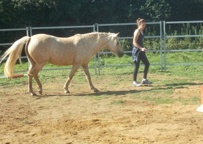 Girl leading pony, Bodster CIC