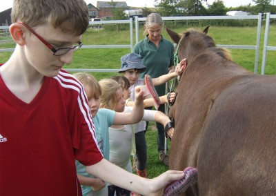 Short break grooming horse