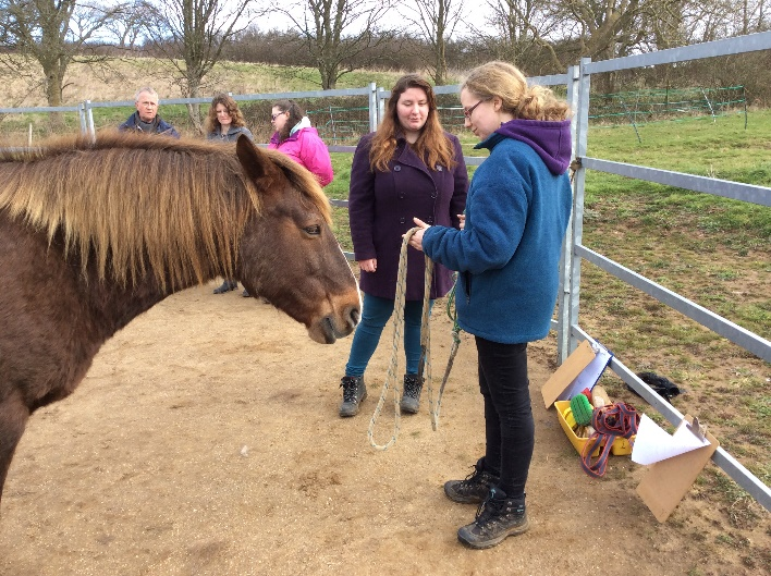 Briony teaching another learner how to put on a headcollar, Bodster