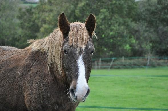 Blue - Bodster pony